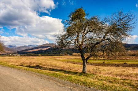 spring has sprung in rural area. tree on agricultural field with yellow weathered grass near the road. snowy peaks of mountain ridge in the distance. nature on sunny day under blue sky with some clouds Stock Photo