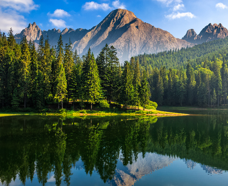 composite summer landscape with spruce trees among tall grass on the shore of a clear lake at the foot of epic high Tatra mountain ridge with rocky peaks under blue sky with clouds Stock Photo
