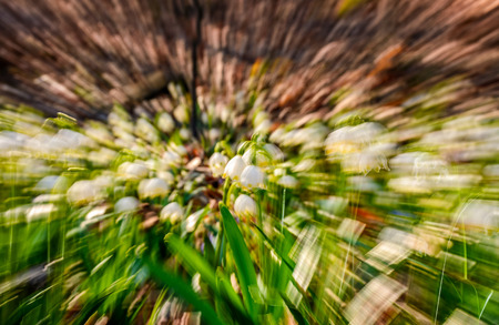 snowflake, first flowers of spring. abstract background with lense zoom blur effect Stock Photo
