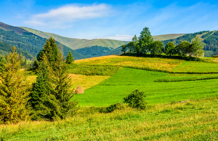 forest in mountain rural area. green agricultural field on a hillside. beautiful summer scenery in overcast weather  Stock Photo