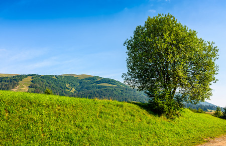 tree on a meadow in rural area on summer day. beautiful landscape in mountain area Stock Photo