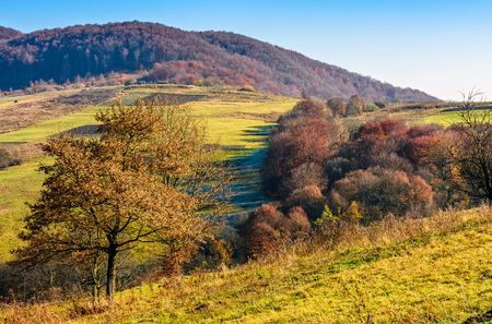 mountain rural area in late autumn season. agricultural field on a hill near the forest with red foliage. beautiful and vivid countryside landscape.