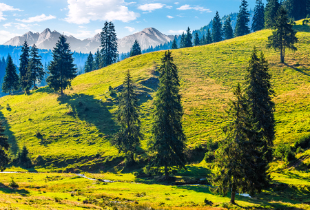 Composite image with spruce forest on a grassy hill  in High Tatra mountains. wonderful summer landscape on a sunny day