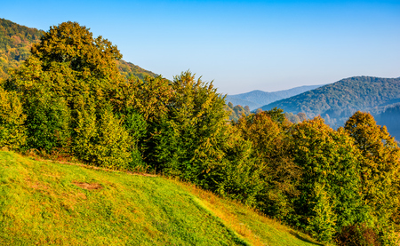 tree branches with orange foliage in forest. hillside on mountain ridge with high hills in the distance on sunny autumn day. beautiful landscape with clear blue sky