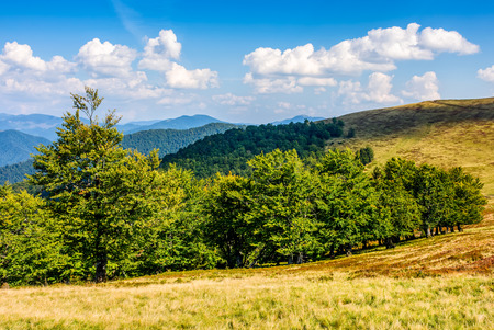 forest on a hill side meadow in high mountains. beautiful summer landscape in fine weather