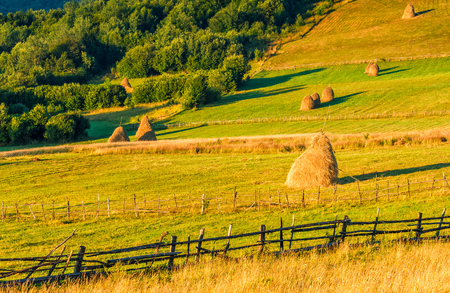 haystacks and a trees behind the fence on a hillside meadow. beautiful summer morning in counrtyside Stock Photo