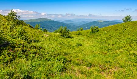 summer mountain landscape. green meadow on the top of hillside in Carpathians