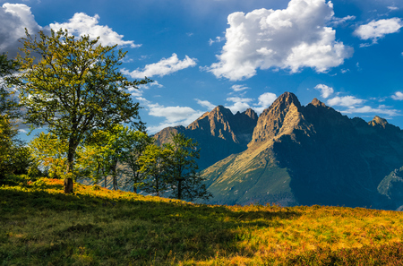 Composite image with trees on a grassy hill  in High Tatry Mountain ridge. wonderful summer landscape on a sunny day. Fine weather with blue sky and clouds