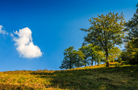 tree on a meadow against the blue sky with cloud. beautiful landscape in mountain area on summer day