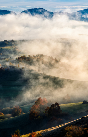 mountain rural area in autumn season. agricultural field in fog on a hill. beautiful and vivid countryside landscape.