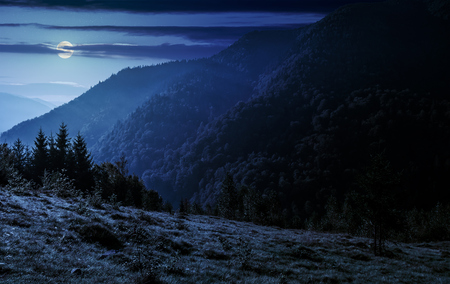 coniferous forest on a steep mountain slope at night in full moon light