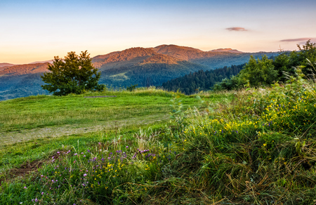 beautiful countryside landscape. wild flowers on rural field near the tree on a tranquil summer morning. mountain ridge under cloudy blue sky Stock Photo