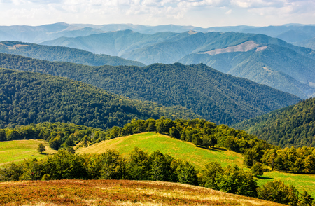 beautiful summer landscape. green grassy meadow on a hillside on top of mountain ridge with some forest down the hill Banco de Imagens