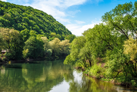 River flows among of a green forest at the foot of the mountain. picturesque nature of rural area in Carpathians. serene summer sunset under blue sky with some clouds Stock Photo