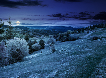 composite countryside landscape. forest in mountain rural area. grassy agricultural field on a hillside. beautiful summer scenery at night in full moon light