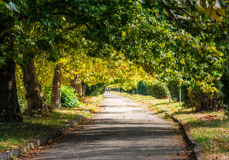 path among the trees in the city park. bright autumn day. Stock Photo