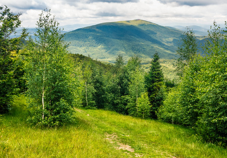 composite mountain landscape. path through the meadow in forest on a hillside. beautiful summer scenery Stock Photo