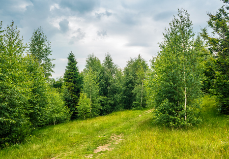 trail in the forest on a hill side meadow. beautiful summer landscape in overcast weather Stock Photo