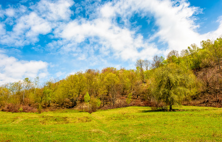 tree on the grassy meadow in mountains. fine weather on bright spring day