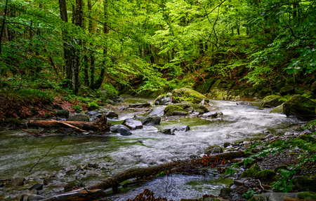 Rapid stream flow through ancient green Carpathian forest. stones covered with moss lay on the shore. beautiful nature view in summer time. Stock Photo