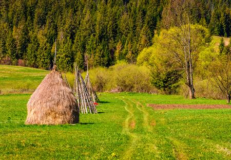 丘の中腹に森林近くの干し草。山岳地帯の農業分野は。美しい田園風景。