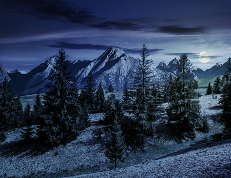 Composite summer landscape with spruce forest on grassy hillside in High Tatra Mountains at night in full moon light Stock Photo