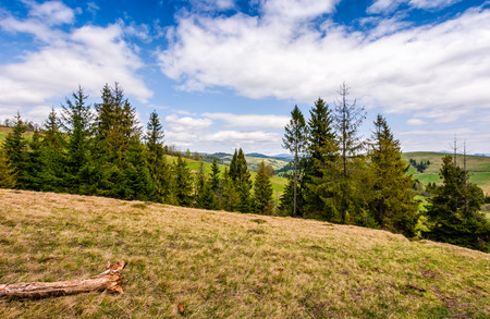 forest on a hill side meadow in high mountains. beautiful spring landscape in fine weather Stock Photo