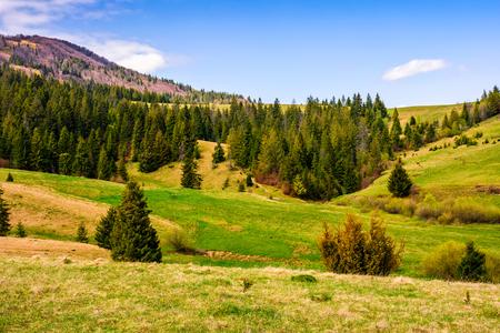 高山の丘側草原の森。天気の良い美しい春の風景