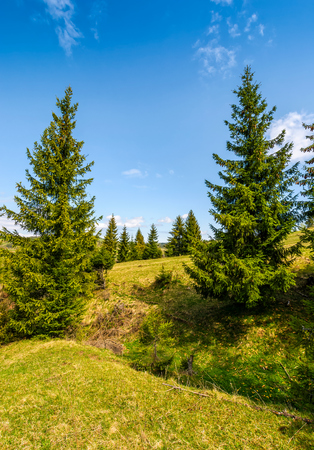 Pile forest at the foot of the mountain on a bright sunny day. blue sky with clouds in springtime landscape Stock Photo