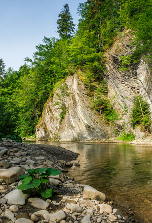 landscape with trees on a cliff nearthe shore of a clear river. fine summer weather with blue sky