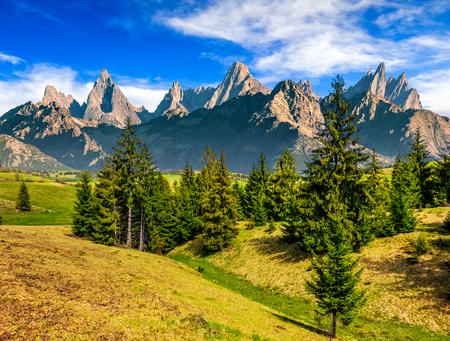 草で覆われた丘の中腹に高タトラ山脈のトウヒ林と複合の夏の風景 写真素材