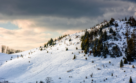 spruce forest on a meadow full of snow in mountains under blue cloudy sky on a sunny winter day