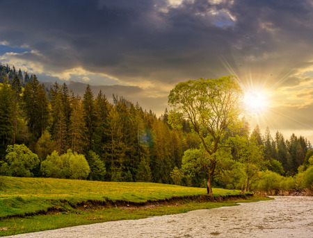 River flows among of a green forest at the foot of the mountain. picturesque nature of rural area in Carpathians at sunset Stock Photo