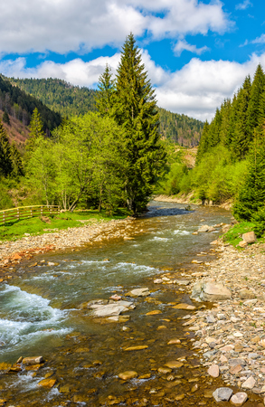 Rapid stream with rocky shore flow through valley. conifer fores on the hillsides of mountains. beautiful springtime nature view in good weather with blue sky and clouds.