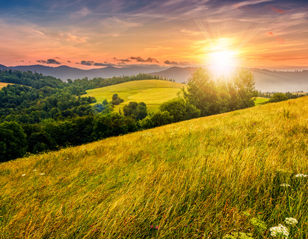 agricultural hay field in mountains. trees on the grassy meadow. beautiful countryside landscape at sunset
