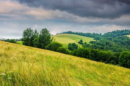 agricultural hay field in mountains. trees on the grassy meadow. beautiful countryside landscape