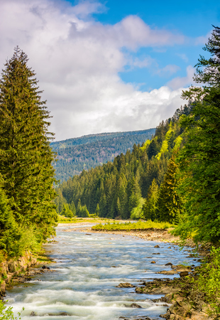 Rapid stream with rocky shore flow through valley. conifer fores on the hillsides of mountains on a sunny day. beautiful springtime nature view in good weather with blue sky and clouds.