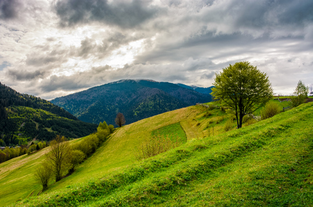 Countryside mountain landscape. trees on a meadow in rural area on overcast springtime day Stock Photo