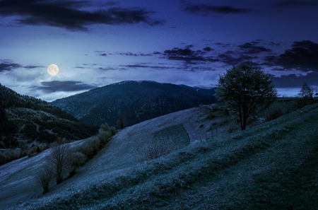 Countryside mountain landscape. trees on a meadow in rural area on beautiful springtime at night in full moon light Stock Photo