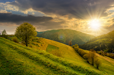 Countryside mountain landscape. trees on a meadow in rural area on beautiful springtime at sunset