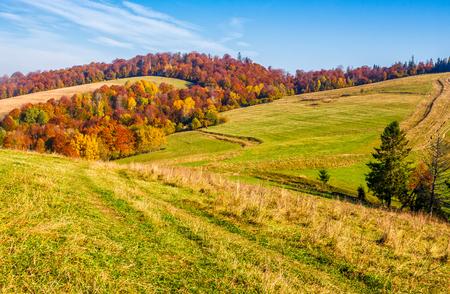 シーズン後半で秋山農村地域。紅葉の森の近くの丘の上の農業分野。美しく、鮮やかな田園風景。 写真素材