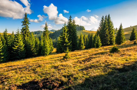 Classic Carpathian landscape. Autumn landscape in mountains of Romania. Conifer forest on hillsides of Apuseni National Park. Fresh and green trees in evening landscape under blue sky with clouds