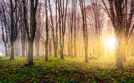foggy sunrise on the meadow in forest. mysterious autumn landscape.