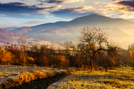 abandoned orchard on a hillside. some orange foliage in golden light. foggy sunrise in mountains