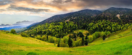 mountain landscape. hillside with trees on green grassy meadow near foggy mountains under overcast sky