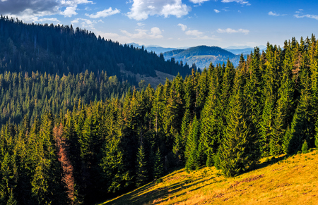 Classic Carpathian landscape. Autumn landscape in mountains of Romania. Conifer forest on hillsides of Apuseni National Park. Fresh and green trees in evening light under blue sky with clouds Stock Photo
