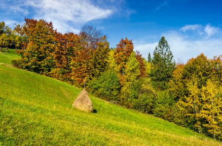 秋の山農村地域。紅葉の森の近くの丘の上に干し草を農業分野。美しく、鮮やかな風景。