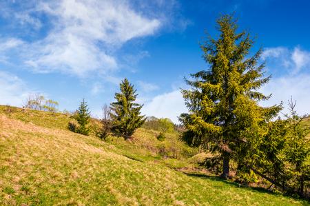 フェンスに丘側の草原の森。美しい夏の天気の良い日。田舎の風景