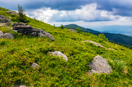 spruce tree among boulders on grassy hillside. gorgeous vewpoint with hill and peak in the distance. spectacular Carpathian mountain landscape