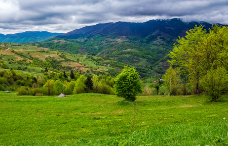rural area in the beautiful valley. vivid Carpathian Countryside landscape